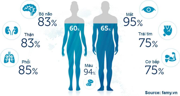 Lượng nước trong cơ thể con người