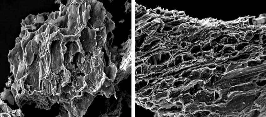 Bề mặt than hoạt tính qua kính hiển vi