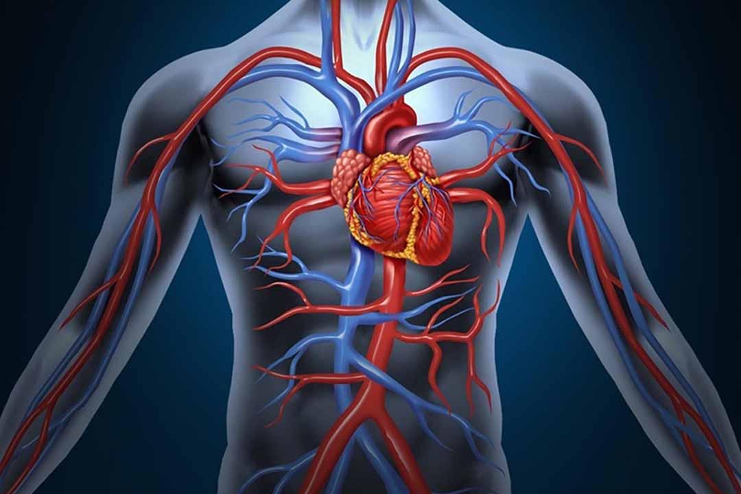 Ăn mặn gây ra bệnh lý về tim mạch
