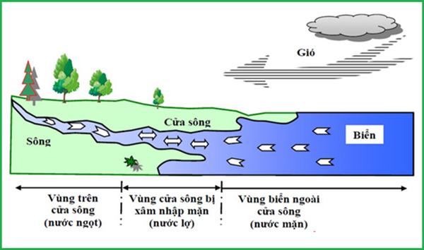 Độ mặn là gì, tại sao nước nhiễm mặn