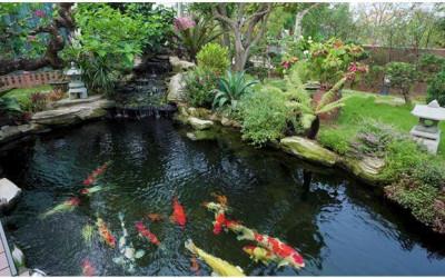 Hệ thống lọc nước hồ cá, vật dụng không thể thiếu trong bất cứ bể cá nào